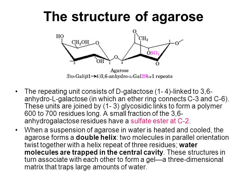 The structure of agarose