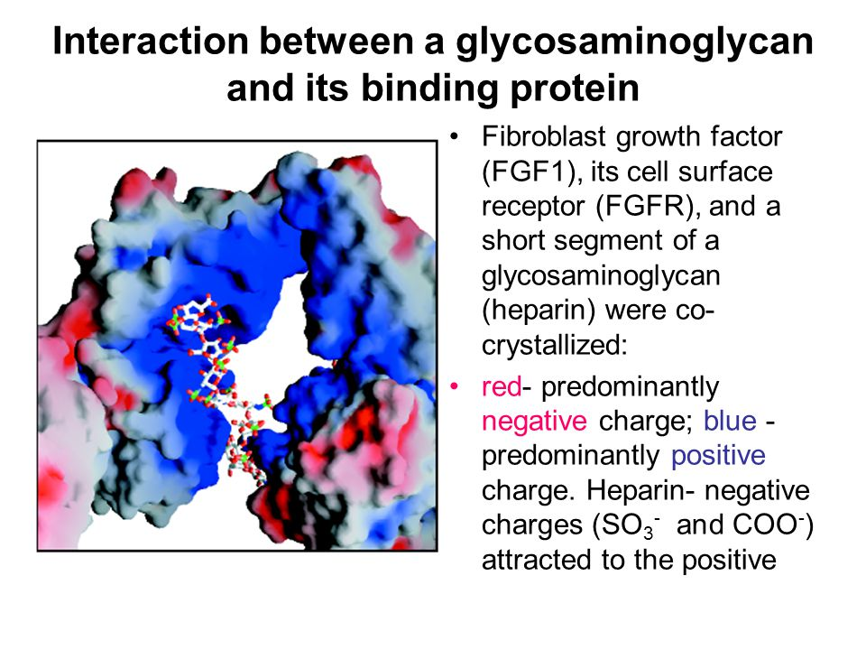 Interaction between a glycosaminoglycan and its binding protein