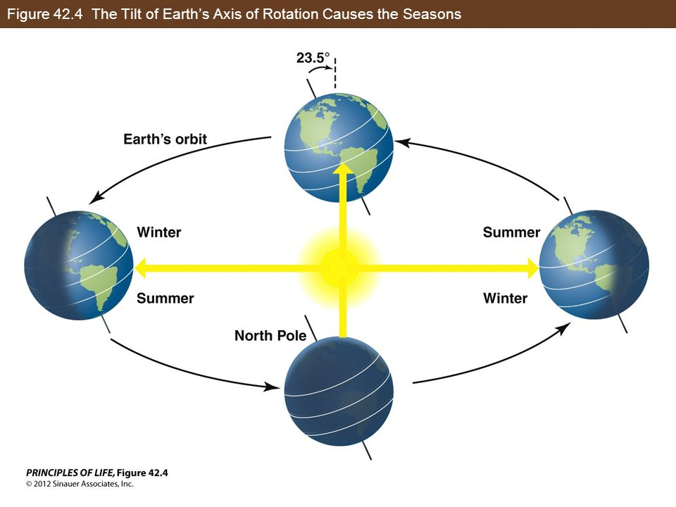 Figure 42.4 The Tilt of Earth's Axis of Rotation Causes the Seasons