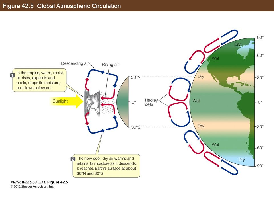 Figure 42.5 Global Atmospheric Circulation