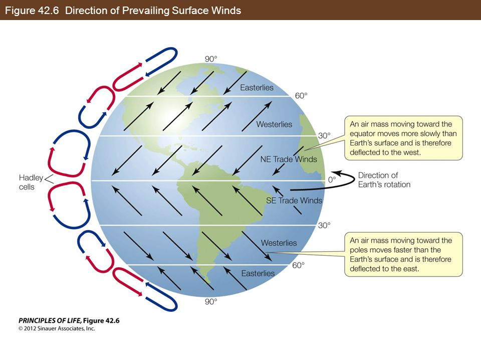 Figure 42.6 Direction of Prevailing Surface Winds