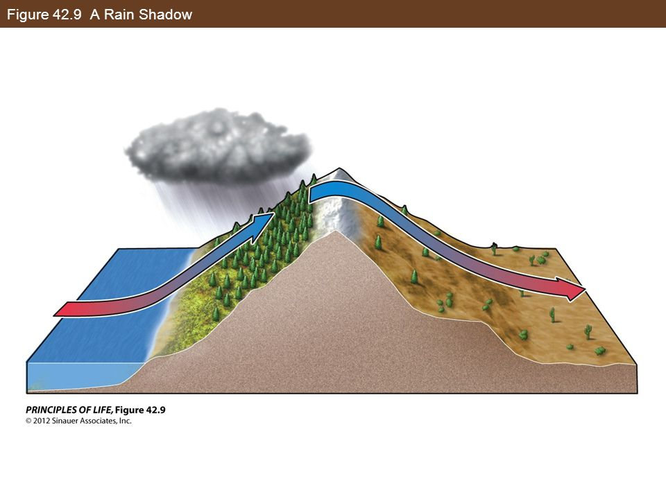 Figure 42.9 A Rain Shadow