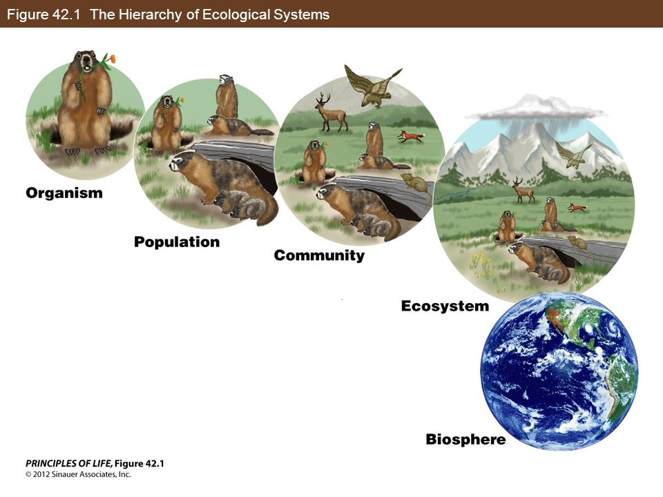 Figure 42.1 The Hierarchy of Ecological Systems