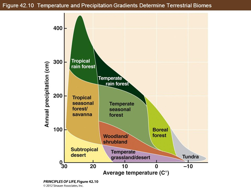 Figure 42.10 Temperature and Precipitation Gradients Determine Terrestrial Biomes