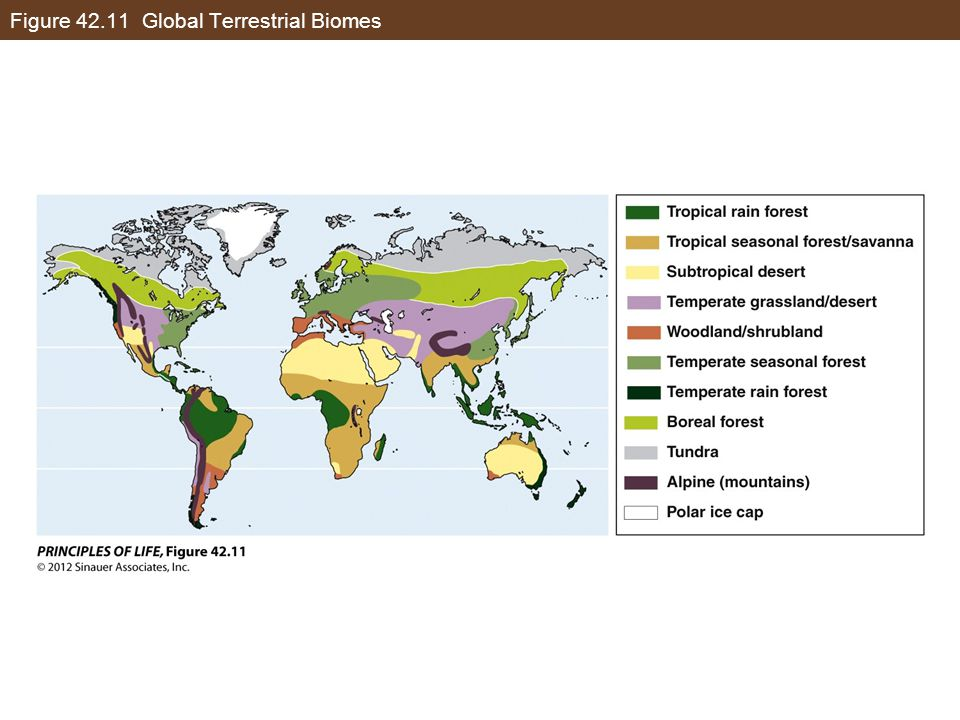 Figure 42.11 Global Terrestrial Biomes