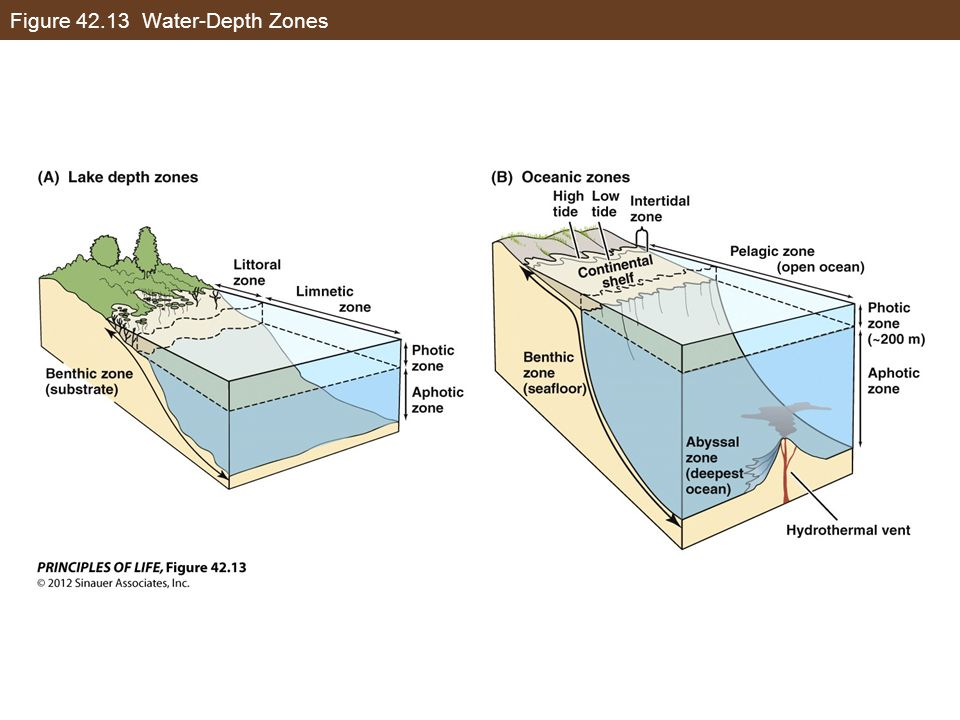 Figure 42.13 Water-Depth Zones