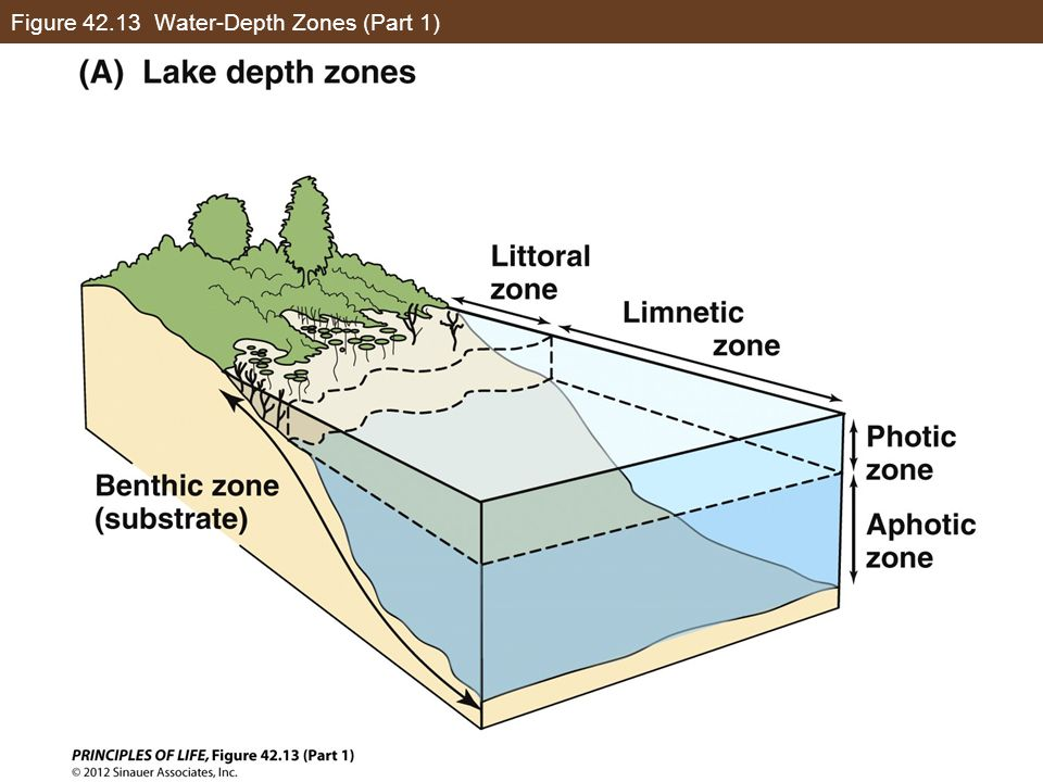 Figure 42.13 Water-Depth Zones (Part 1)
