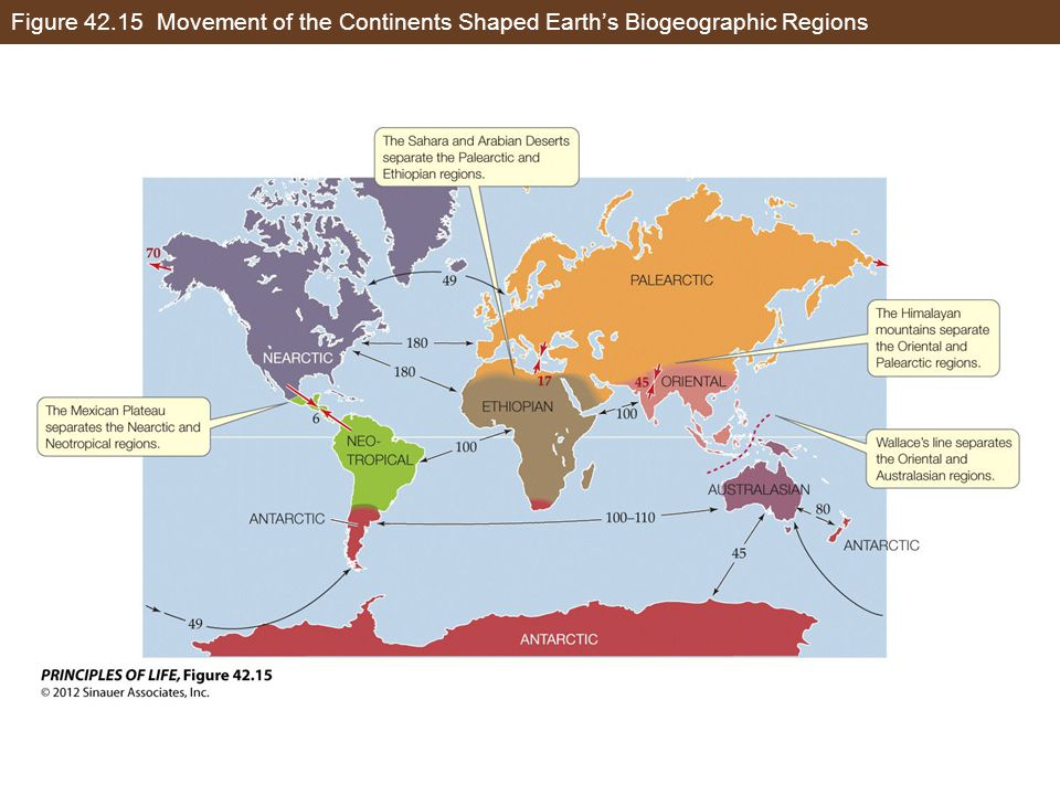 Figure 42.15 Movement of the Continents Shaped Earth's Biogeographic Regions