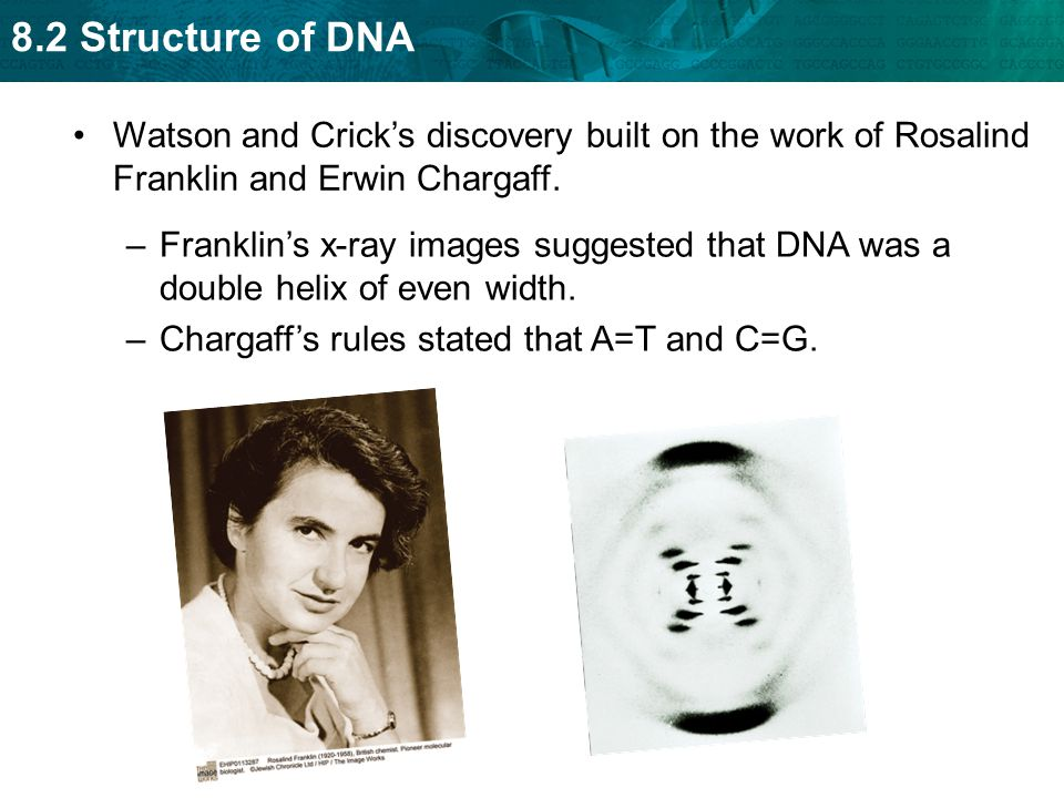Watson and Crick's discovery built on the work of Rosalind Franklin and Erwin Chargaff.