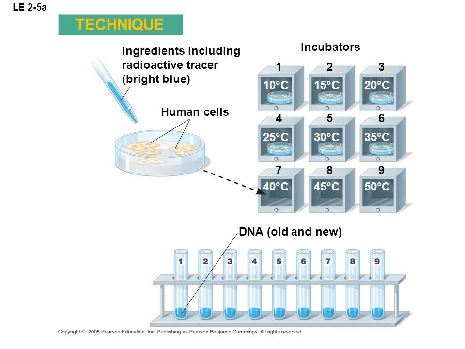 TECHNIQUE Incubators Ingredients including radioactive tracer