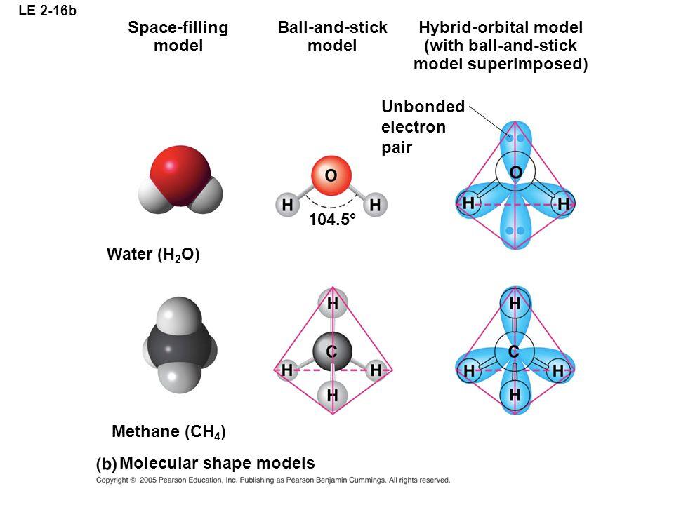 Molecular shape models