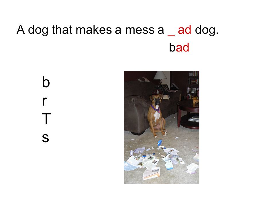 A dog that makes a mess a _ ad dog.