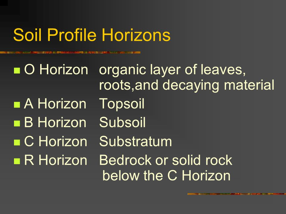 Soil Profile Horizons O Horizon organic layer of leaves, roots,and decaying material. A Horizon Topsoil.