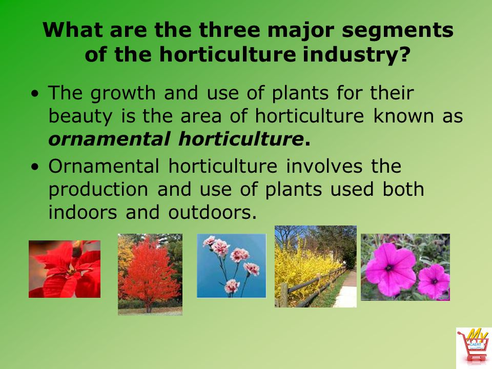 What are the three major segments of the horticulture industry