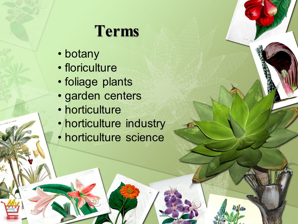 Terms botany floriculture foliage plants garden centers horticulture
