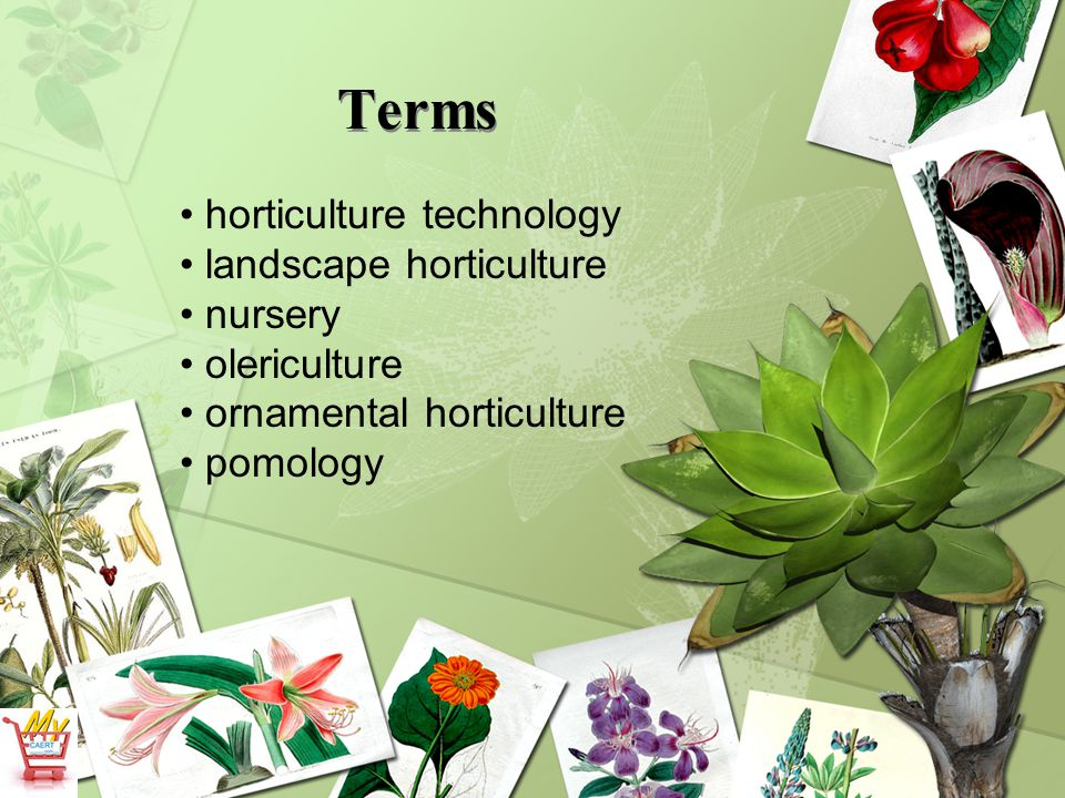 Terms horticulture technology landscape horticulture nursery
