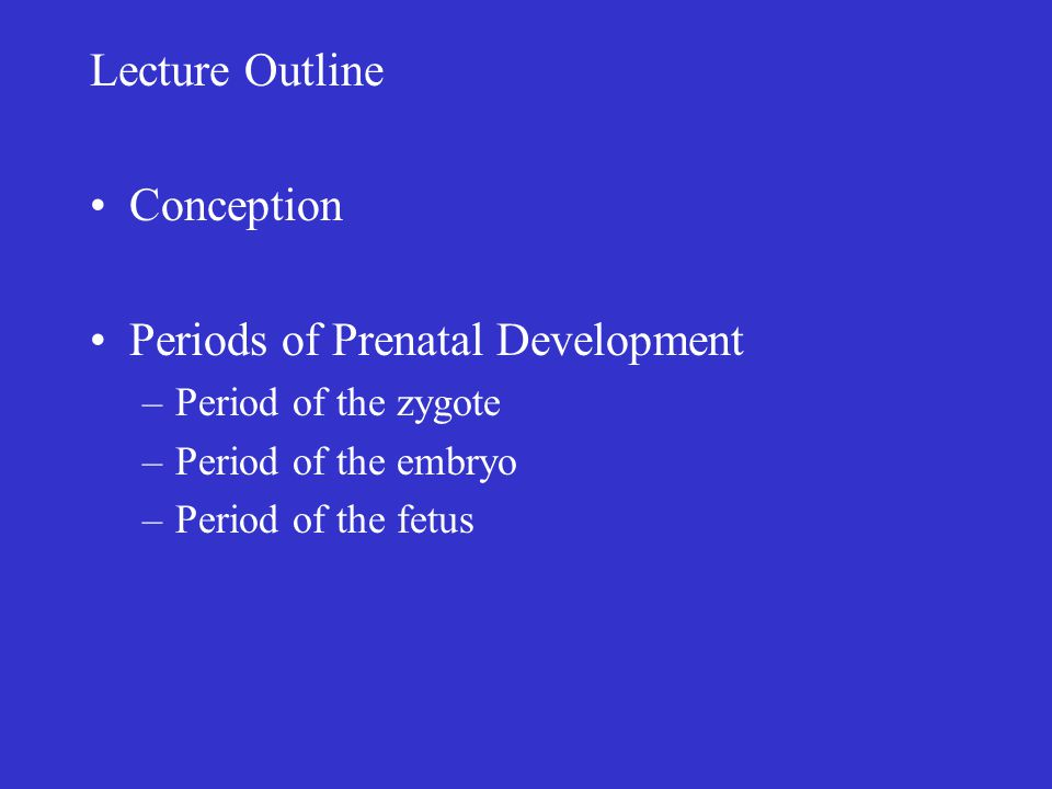 Periods of Prenatal Development