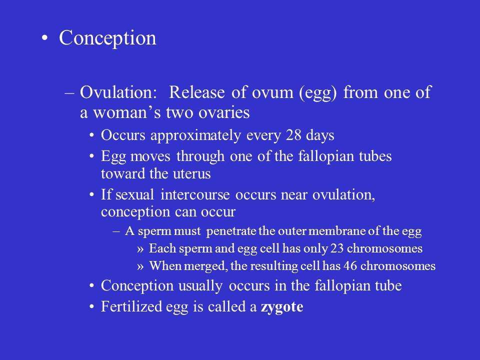 Conception Ovulation: Release of ovum (egg) from one of a woman's two ovaries. Occurs approximately every 28 days.