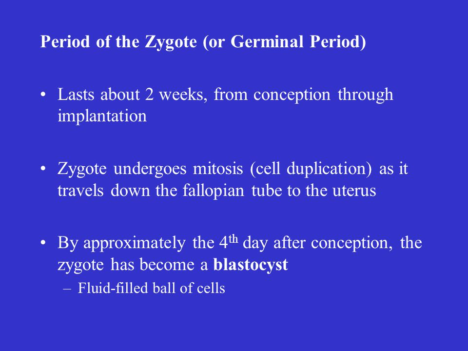 Period of the Zygote (or Germinal Period)
