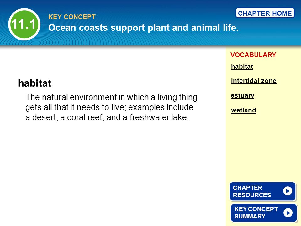 11.1 habitat Ocean coasts support plant and animal life.