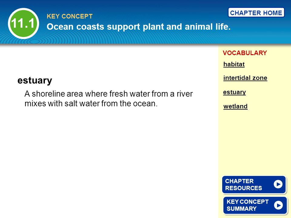 11.1 estuary Ocean coasts support plant and animal life.
