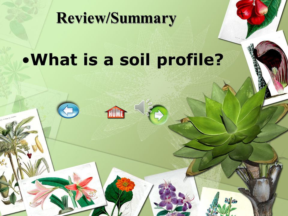 Review/Summary What is a soil profile