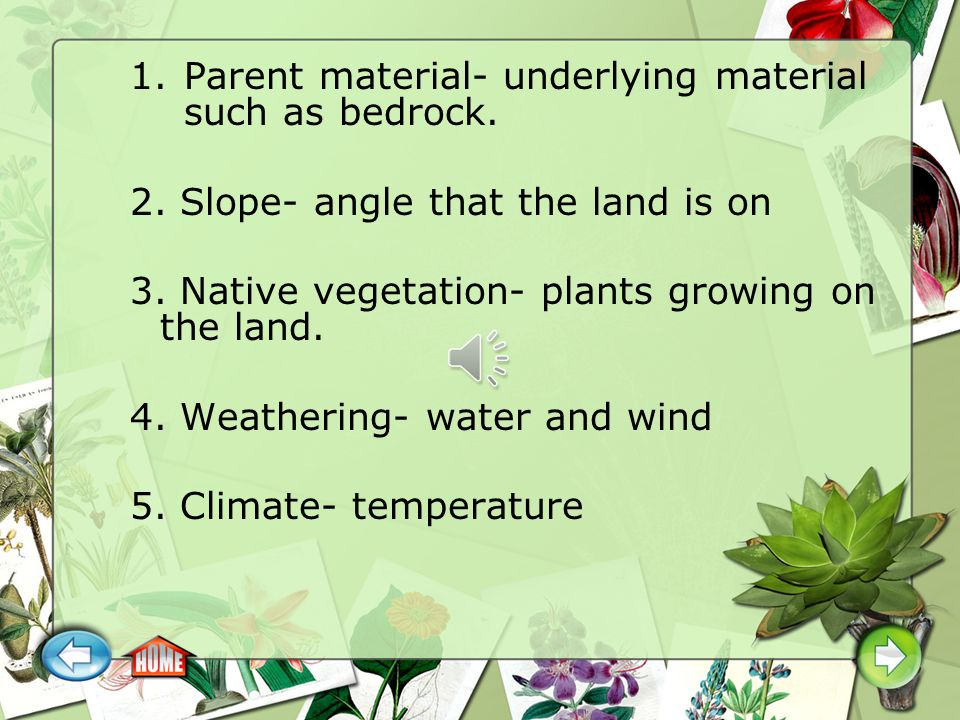 Parent material- underlying material such as bedrock.