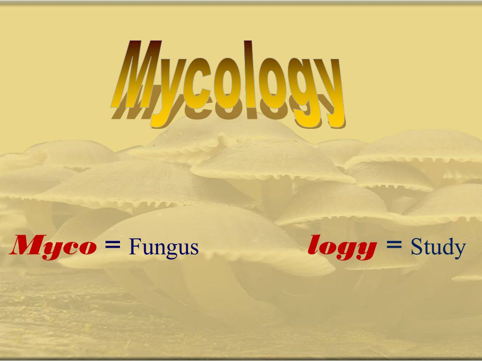 Mycology Myco = Fungus logy = Study