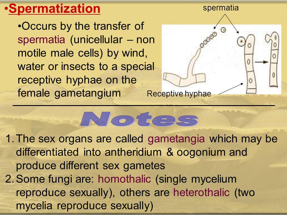 Spermatization spermatia.