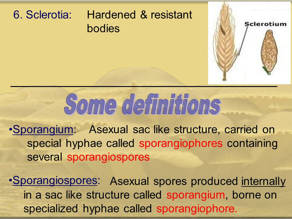 Some definitions 6. Sclerotia: Hardened & resistant bodies