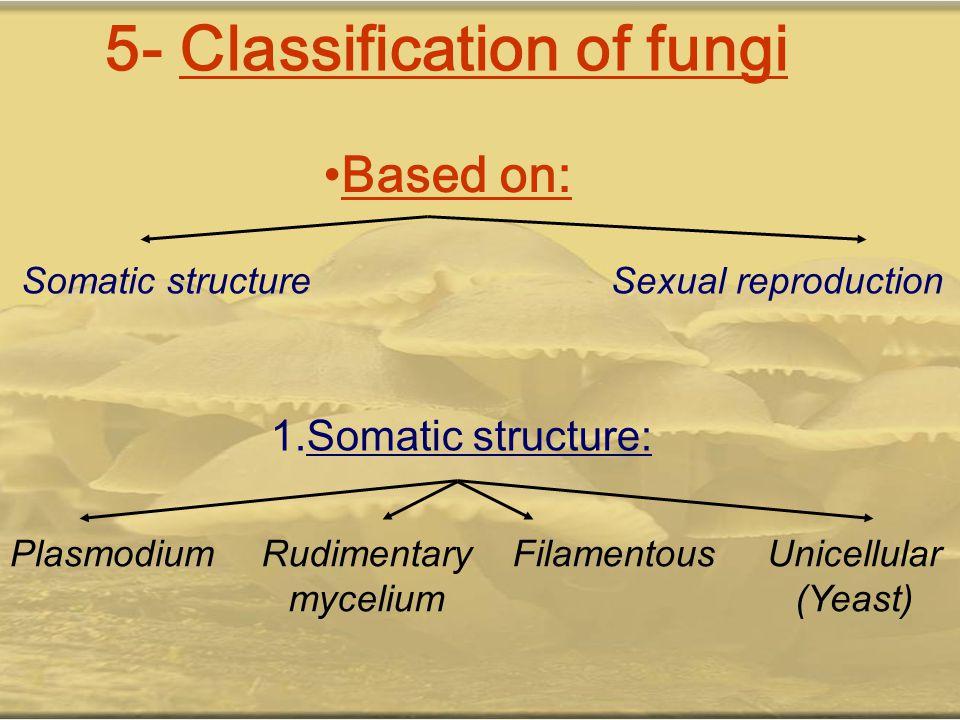 5- Classification of fungi