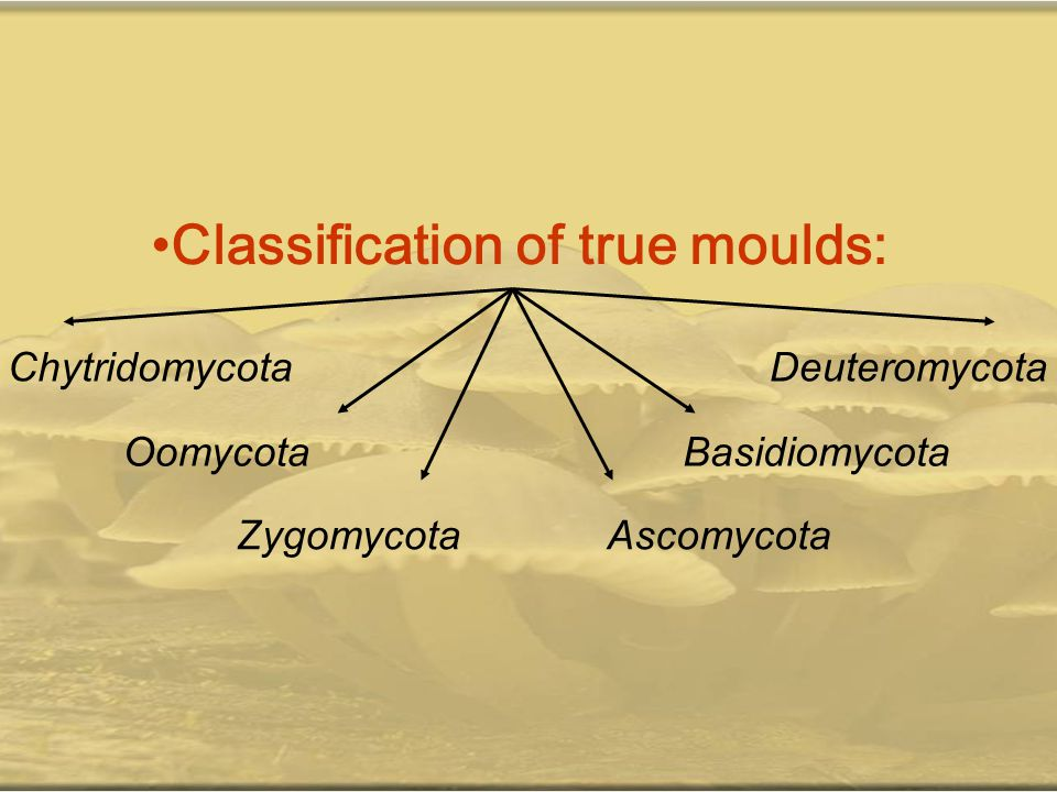 Classification of true moulds: