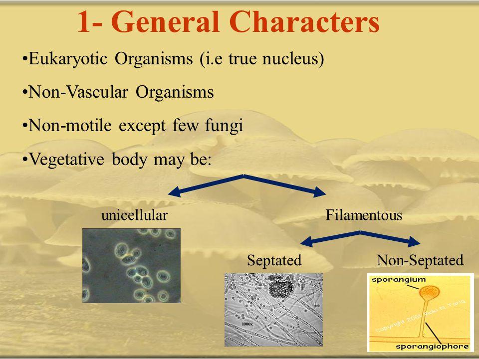 1- General Characters Eukaryotic Organisms (i.e true nucleus)