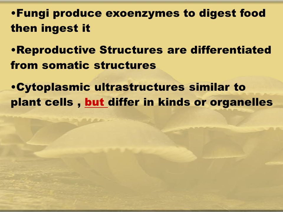 Fungi produce exoenzymes to digest food then ingest it