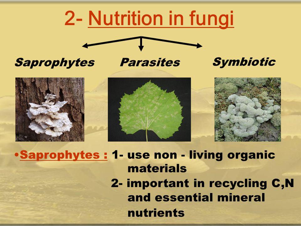 2- Nutrition in fungi Saprophytes Parasites Symbiotic