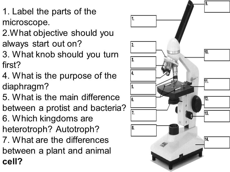 1. Label the parts of the microscope. 2