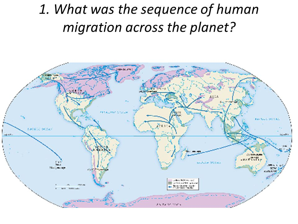 1. What was the sequence of human migration across the planet