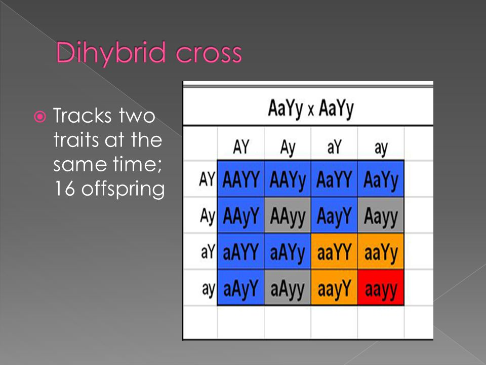 Dihybrid cross Tracks two traits at the same time; 16 offspring