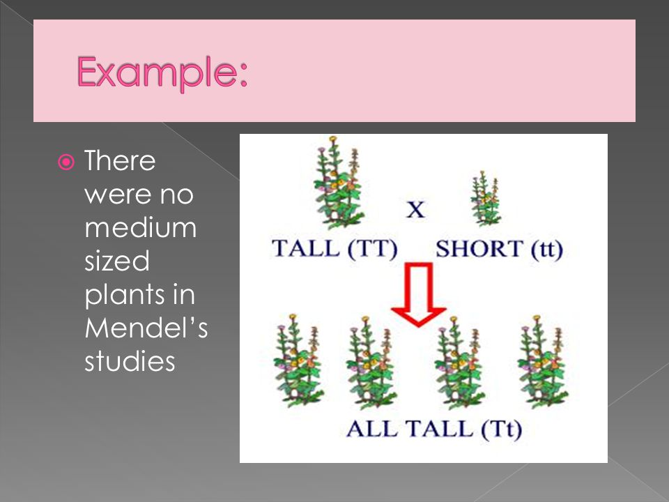 Example: There were no medium sized plants in Mendel's studies