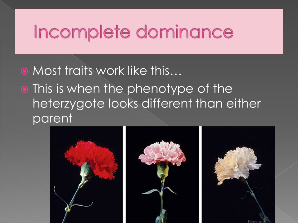 Incomplete dominance Most traits work like this…