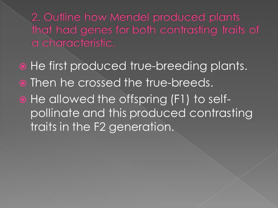 He first produced true-breeding plants.