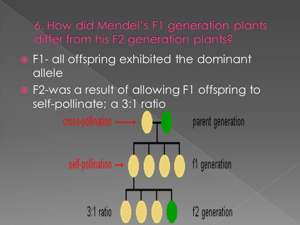 6. How did Mendel's F1 generation plants differ from his F2 generation plants