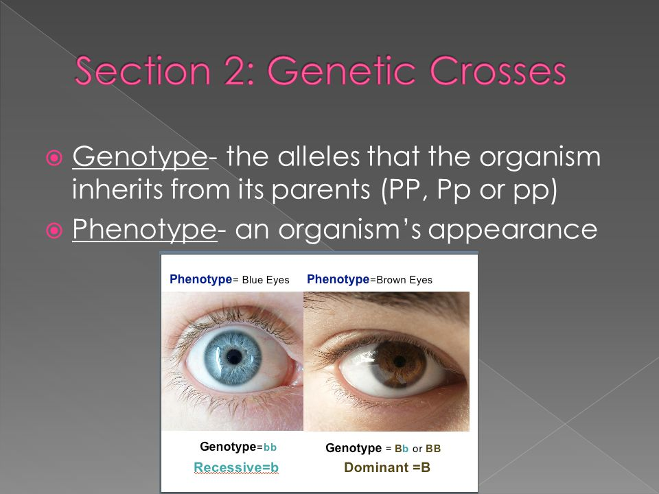 Section 2: Genetic Crosses