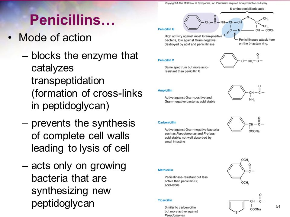 Penicillins… Mode of action