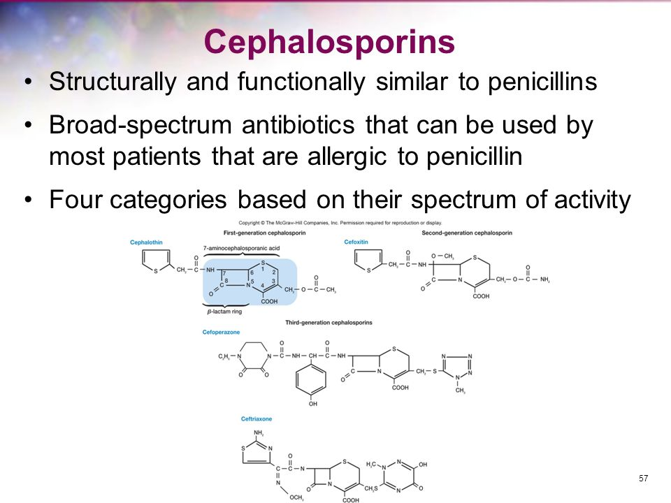 Cephalosporins Structurally and functionally similar to penicillins