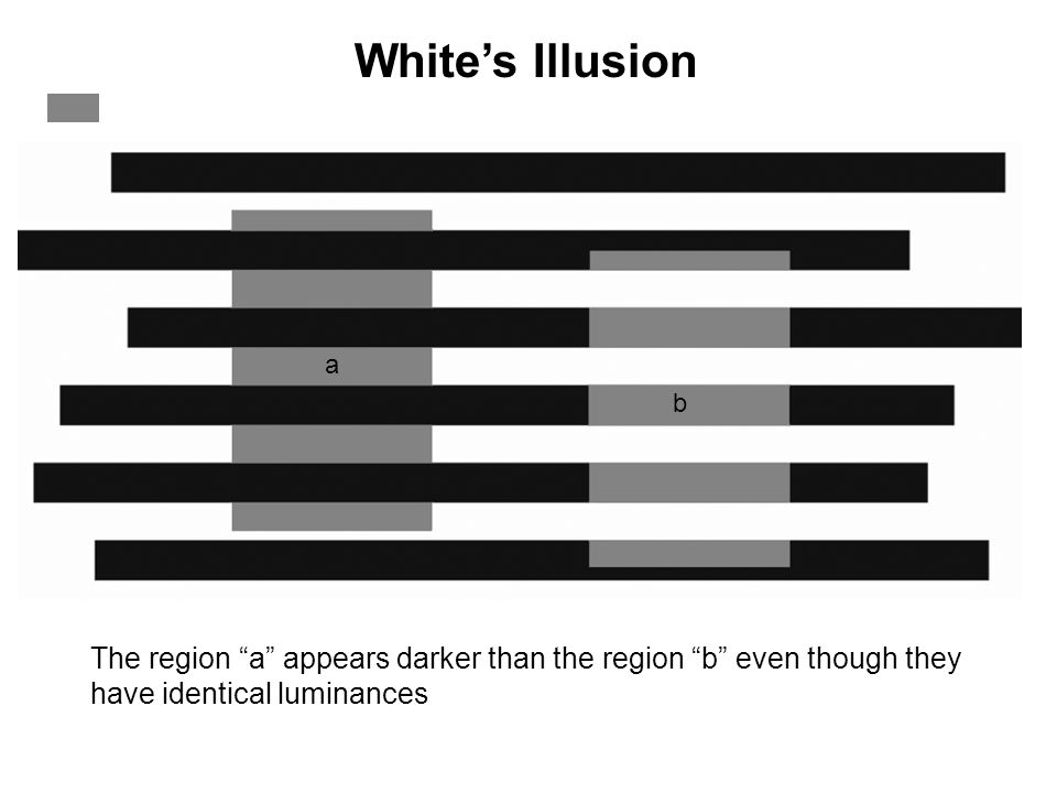 White's Illusion a. b.
