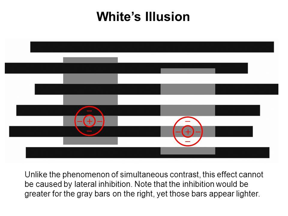 White's Illusion + _. + _.