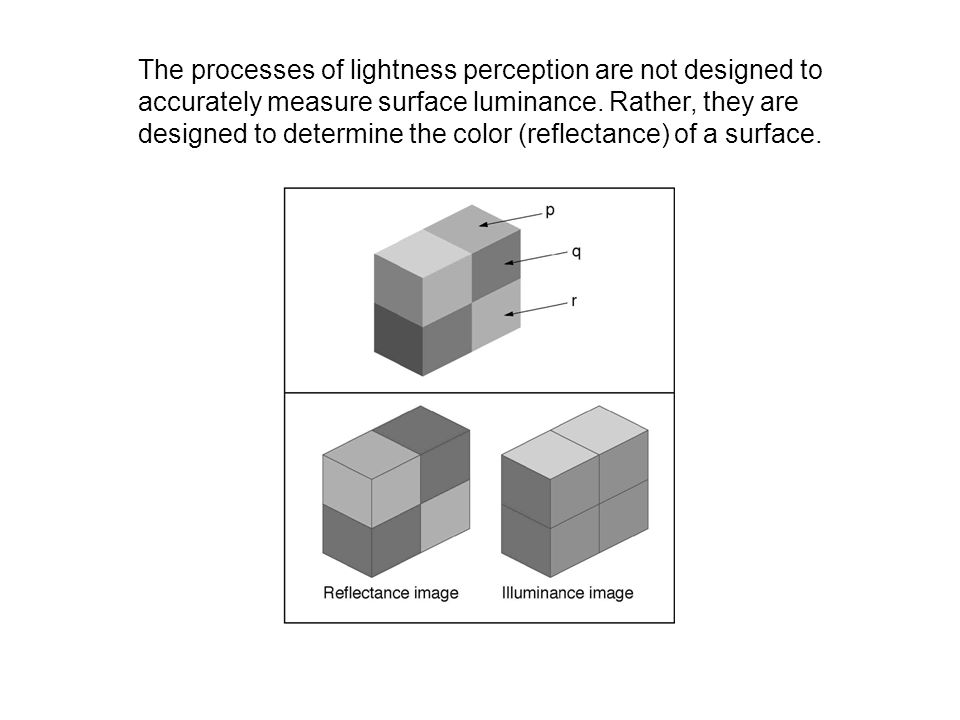The processes of lightness perception are not designed to accurately measure surface luminance.
