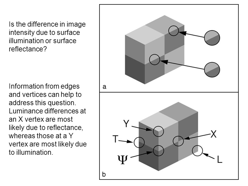 Is the difference in image intensity due to surface illumination or surface reflectance
