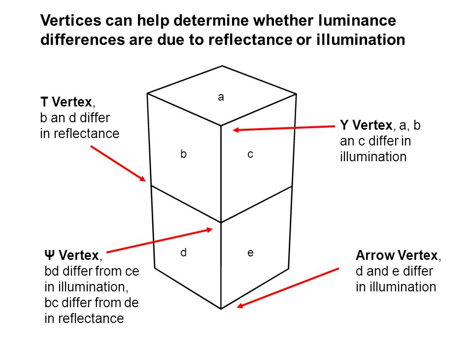 Vertices can help determine whether luminance differences are due to reflectance or illumination